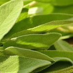 CBD Stress Relief Ingredient - Sage